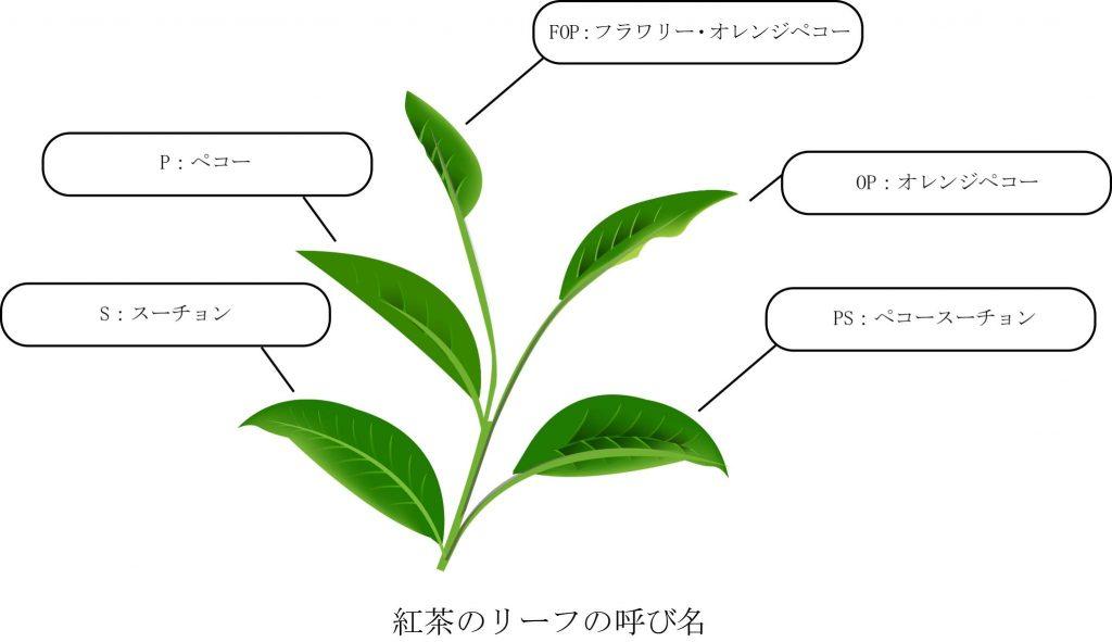 紅茶のリーフの呼び名