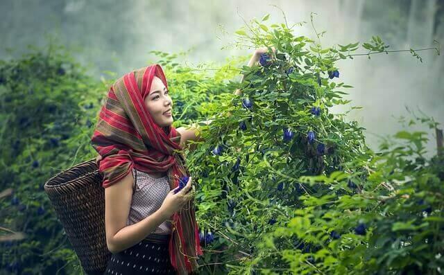 インドネシアの紅茶