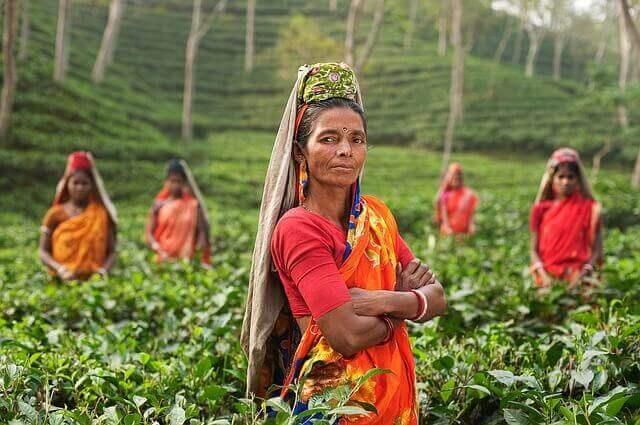 インドの紅茶